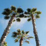 10 LÍ DO KHIẾN CALIFORNIA LÀ ĐIỂM ĐẾN DU HỌC HẤP DẪN